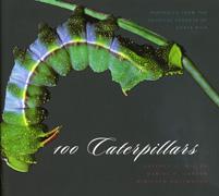 100   Caterpillars