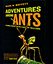Adventures With Ants