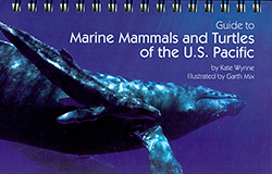 Marine Mammals of the Pacific
