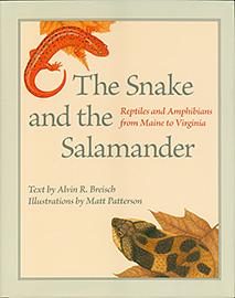 Snake and Salamander