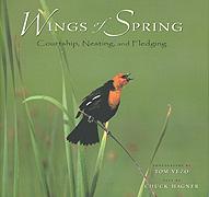wings of Spring